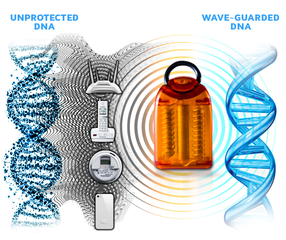 Wave-Guard Protects DNA From Harmful Scalar Waves